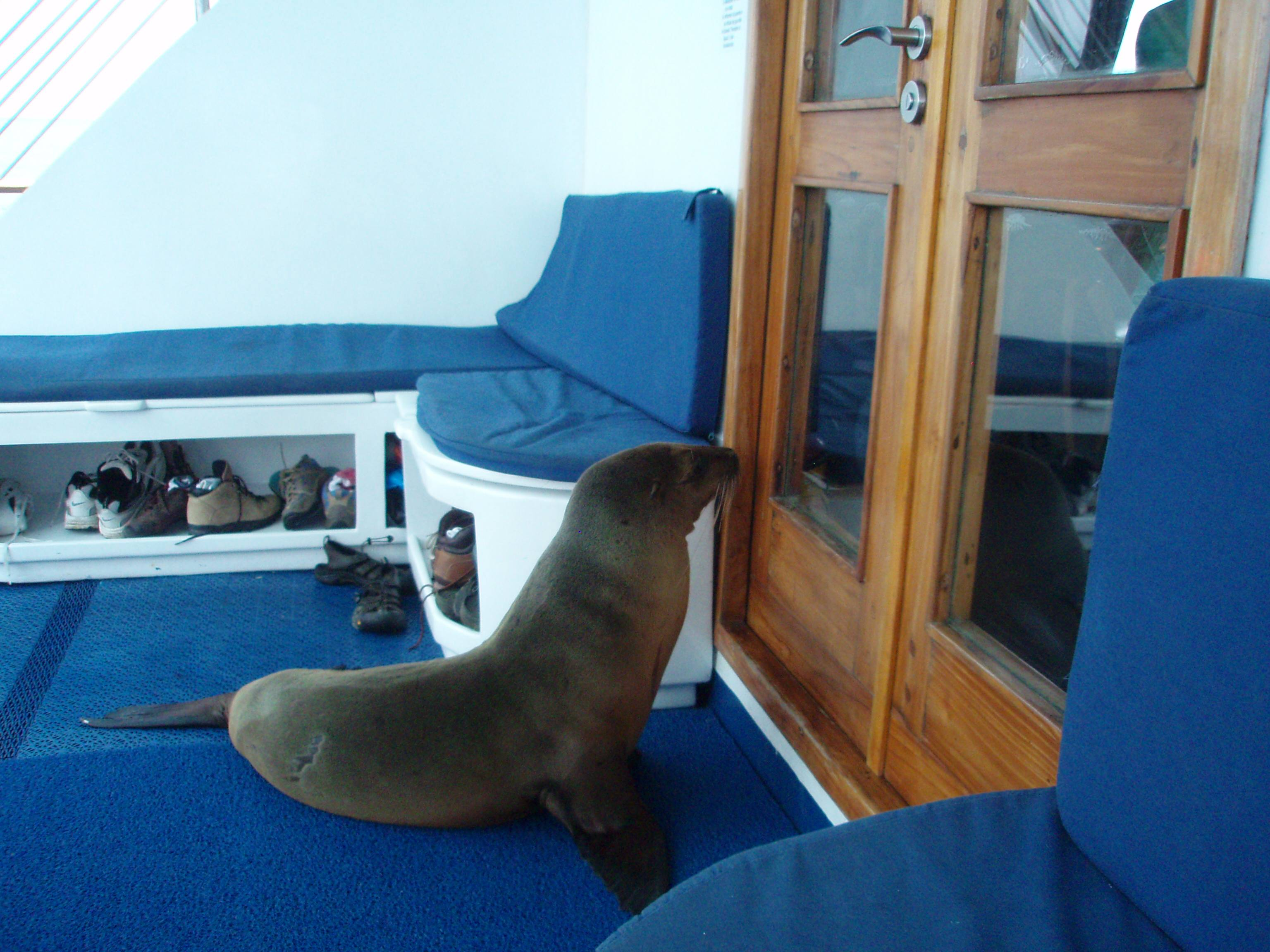 The sea lion who climbed onto our boat.