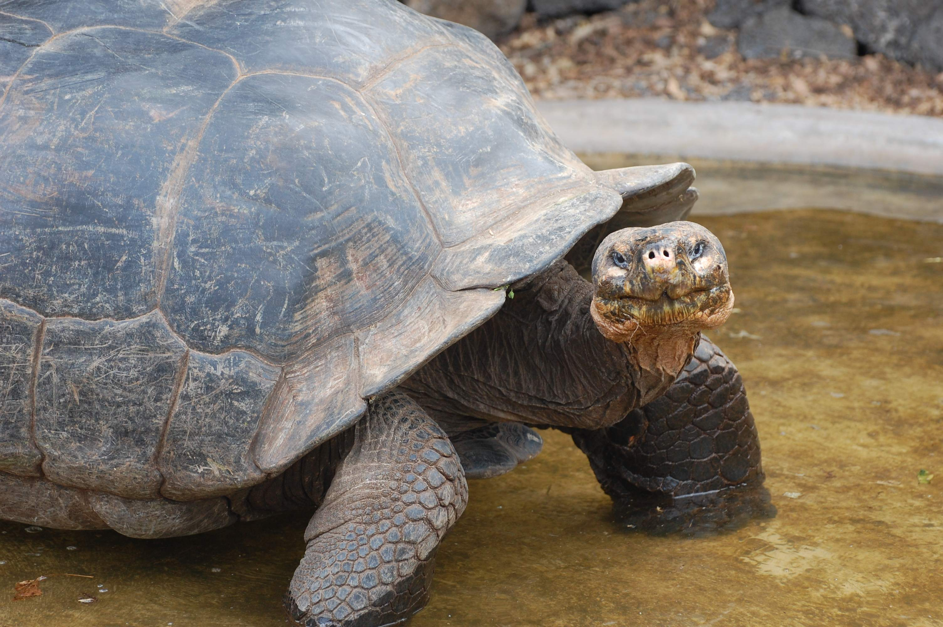 This tortoise knows how to pose for the cameras.